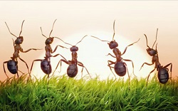 Eξόντωση μυρμηγκιών μέσα στο σπίτι 8b3e310fe4b