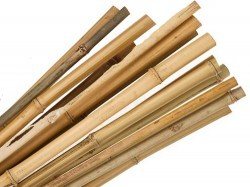 bamboo_canes_a