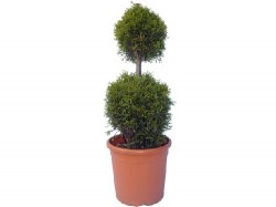 topiary_gold8